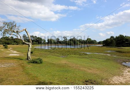 Green grass and blue skies at Hatchet Pond in the New Forest