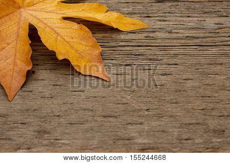 Golden Maple Leaf On Wooden Background