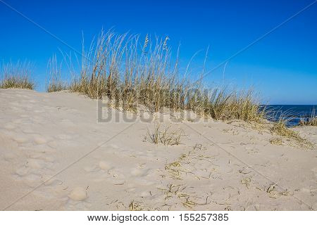 Beach grass on sand dune at Sandbridge Beach in Virginia Beach, Virginia.