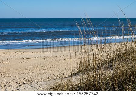 Sandbridge Beach in Virginia Beach, Virginia with beach grass and an ocean background.