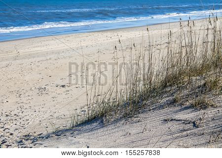 Beach grass on Sandbridge Beach in Virginia Beach, Virginia with ocean and waves.
