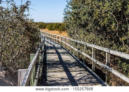 Footpath through foliage at Back Bay National Wildlife Refuge in Virginia Beach, Virginia.