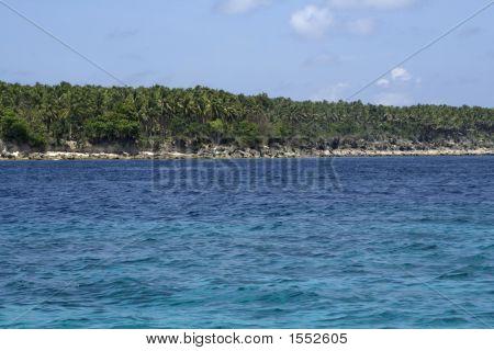 Sea, Coast, Forest