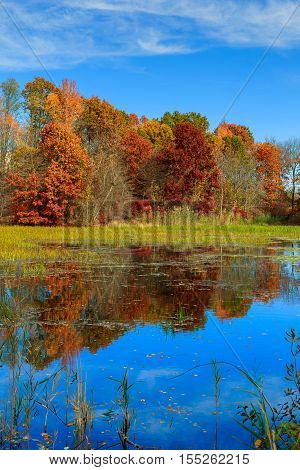 Autumn Landscape.   With Colorful Forest.