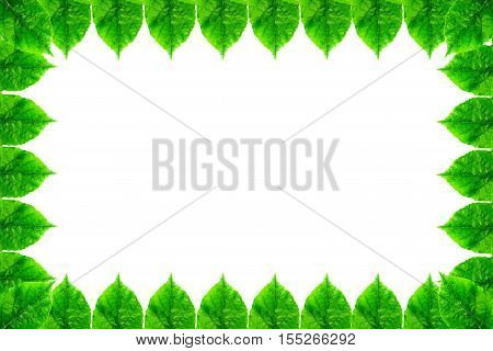 Background Of Green Leaf Frame Isolated On A White Background. Image With Copy Space And Color Effec