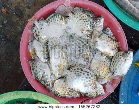 Fresh seafood (Scatophagus) in the local market