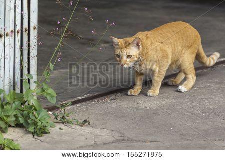 Beautiful orange cat on the stree. Portrait of a cat close-up