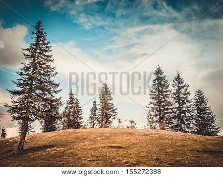 Majestic trees at autumn mountain valley. Dramatic and picturesque morning scene. Warm toning effect. Carpathians, Ukraine, Europe. Beauty worldmountain landscape on the blue sky background