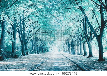 Perfect alley in the park between tall trees. Image toned in blue color. Winter landscape. Beautiful nature background