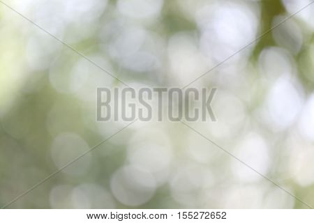 Abstract nature bokeh blurred background for the design advertising your text on backdrop in copy space.