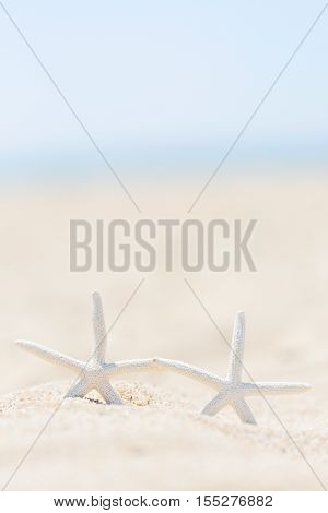 two white starfish in the sand at the beach vacation and travel concept