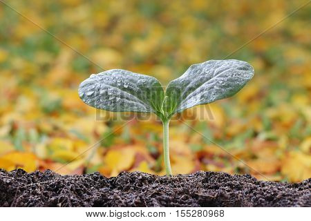 Young plant of tropical tree on soil in the morning light and have autumn nature background.