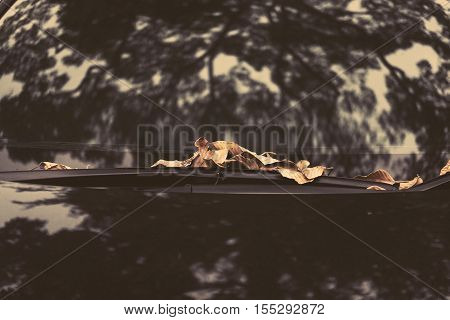 Dried autumn leaf on car windshield with shadow and reflection of trees, vintage tone