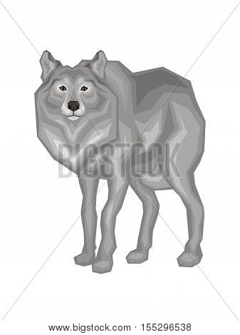 The big grey wolf.  Vector image of a predatory animal. Isolated on a white background.