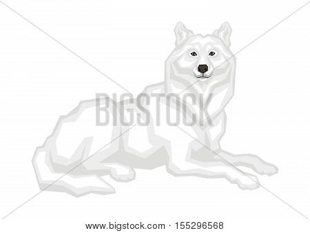 The big Arctic wolf.  Vector image of a predatory animal. Isolated on a white background.