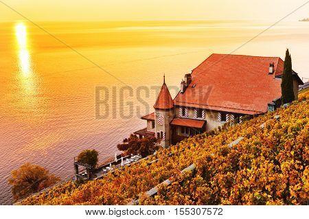 Vineyard terraces at Lake Geneva in autumn, Lavaux, Vaud, Switzerland
