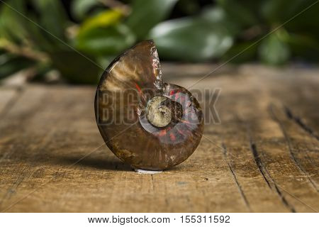 fossil mineral stone specimen the natural geology