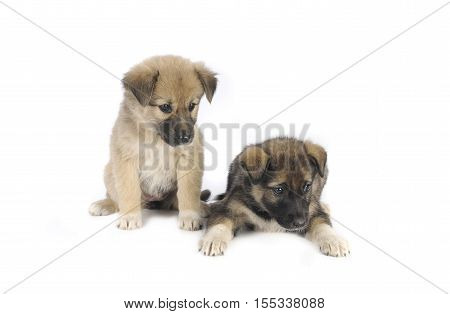 Two Puppy
