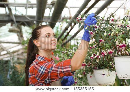 Pretty gardener looking after beautiful flowers in greenhouse