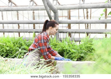 Pretty young gardener looking after ferns in greenhouse
