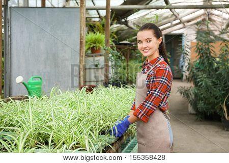 Pretty gardener looking after chlorophytum in greenhouse
