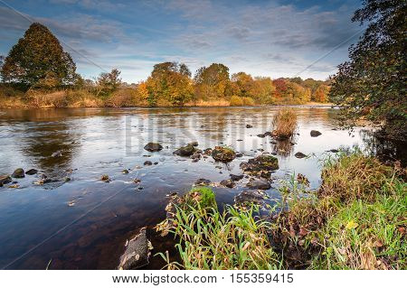 River South Tyne in Autumn,  just above the confluence with the North Tyne near Warden, Northumberland