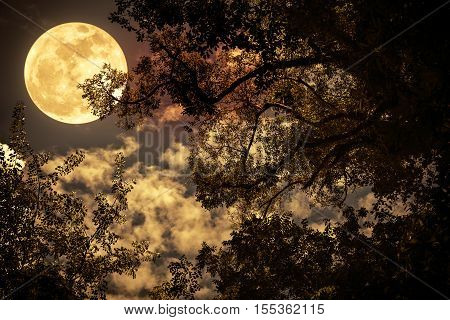 Silhouette Of The Branches Of Trees Against The Night Sky In A Full Moon. Vintage Tone.