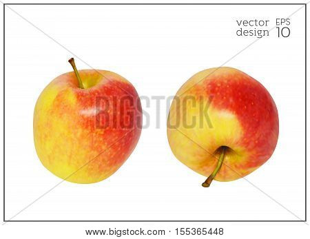 Realistic red and yellow apples iIsolated on white background. Natural fruit. Collection of dietary products. Elements for design. Vector illustration EPS 10.