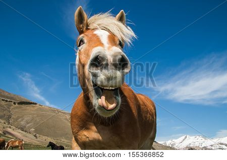 Funny portrait of smiling horse against the blue sky