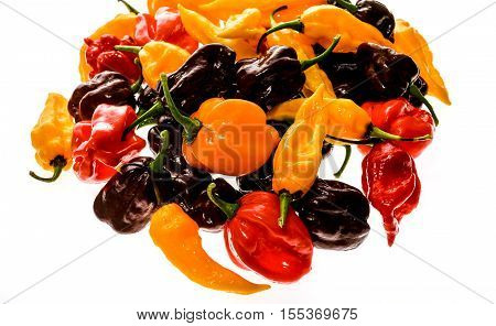 Different variety of hot peppers bunch of chilies isolated on white. Hot pepper Sarit Gat Red Cherry Cayenne Serrano Caribbean Habanero Orange Jalapeno Fatalii Yellow Trinidad Scorpion Moruga