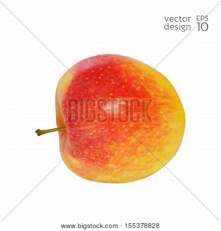 Apple-fruit-realistic-red-yellow-diet-5.eps
