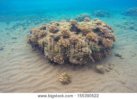 Tropic sea landscape with sand bottom and corals. Colorful sea life. Tropical seaside with reflections. Snorkeling photo. Seaview in turquoise and yellow colors. Coral reef growing in still lagoon