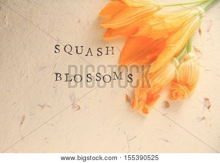 Several squash flowers with the words squash blossoms on textured paper