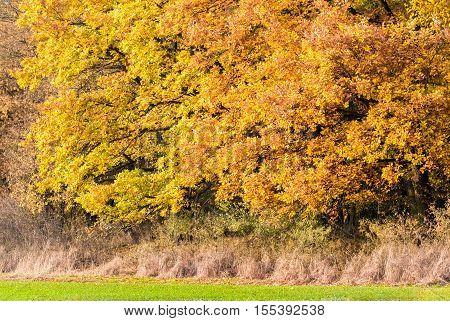Amazing Colorful Autumn Trees