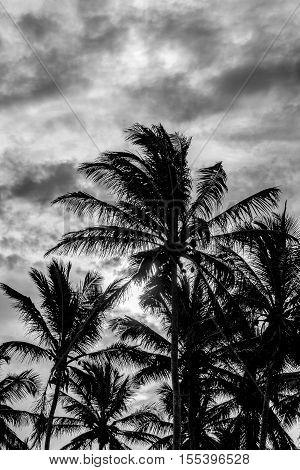 Tropical Sunset Scene Portho Gallinhas Brazil