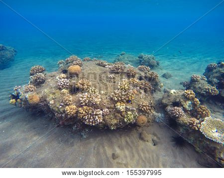Tropic sea landscape with sand bottom and corals. Colorful sea life. Tropical seaside with reflections. Snorkeling photo. Seaview in turquoise and yellow colors. Coral reef growing in blue lagoon
