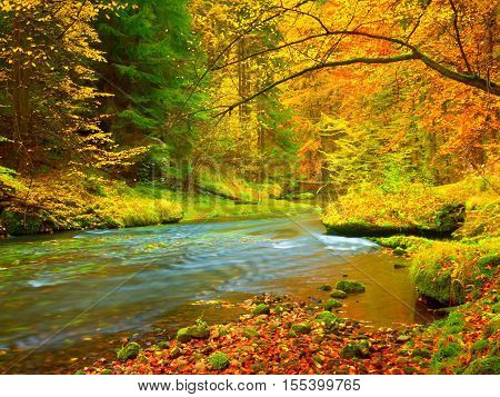 Autumn Landscape, Colorful Leaves On Trees, Morning At River After Rain.