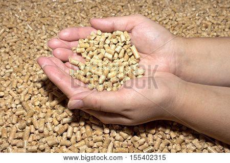 Biofuels. Wood pellets in female hands . The cat litter.