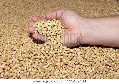 Male hand takes the wood pellets . Wood pellets used as cat litter.