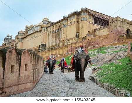 Mahouts And Elephants In The Amber Fort, India