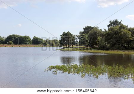 View of the water at Hatchet Pond in the New Forest