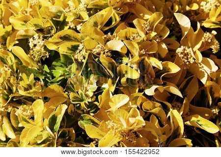 The blossoming plants with beautiful yellow leaves