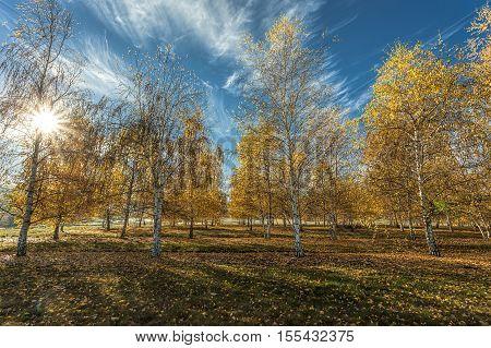 Sun shines through autumn trees near Plummer Idaho.