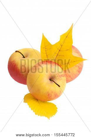 Three apples with autumn leaves, isolated on white background