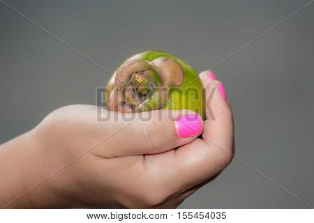 closeup amazing beautiful view of a woman's hand holding green exotic tropical fruit in her hand on dark grey background