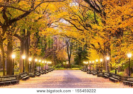 Central Park at The Mall in New York City during predawn.