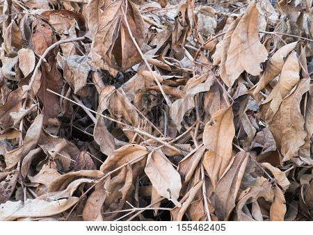 Dry large leafs yellow without tree summer
