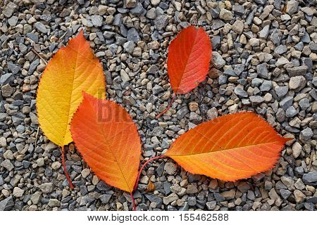 Four autumn leafs-Red and yellow leafs on grey pebble backround