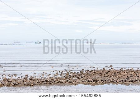 Tranquil view of beach and boats on background.