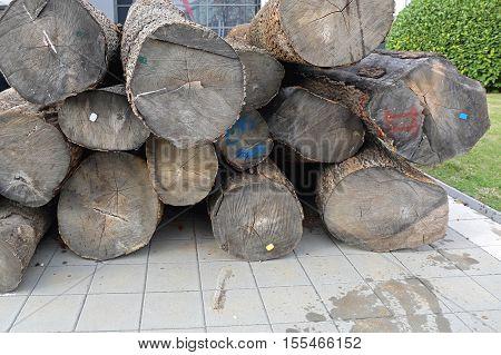 Big Pile of Wood Timber Log Material
